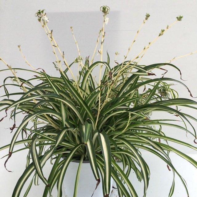 Piante Per Ingresso Buio : Ecco le piante di appartamento che sopravviverebbero