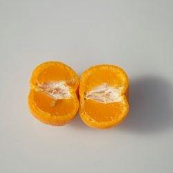 MANDARINO AVANA APIRENE - Citrus reticulata