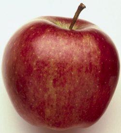 frutto di melo starking