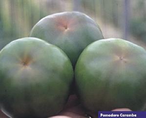 13456_01 Pomodoro Caramba