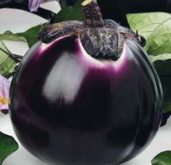 13462_01 Melanzana violetta Barbarella