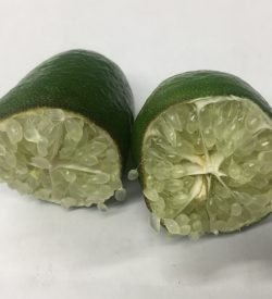 LIMONE CAVIALE BIANCO Citrus faustrime - frutto aperto